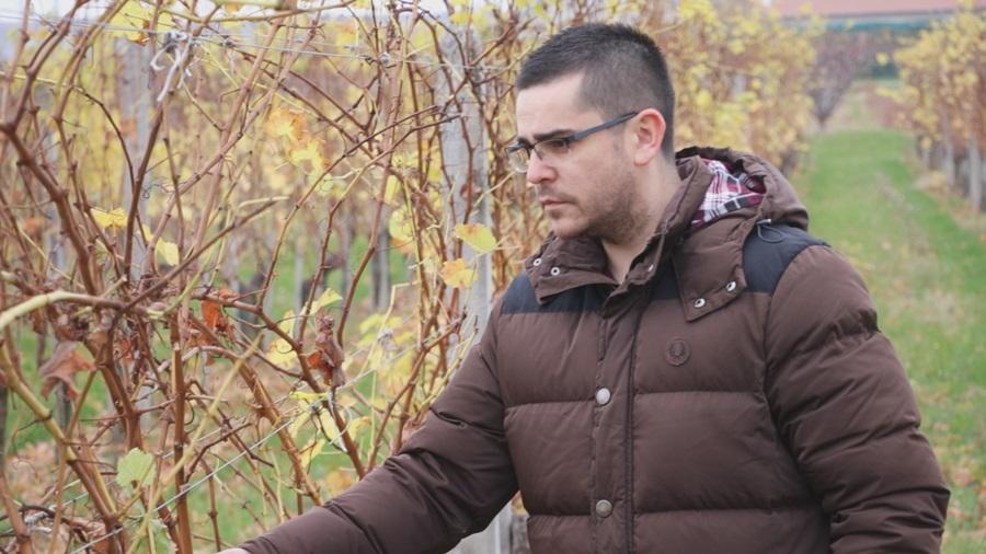 Ко хоће да ради, виноград нека сади: За виноградаре нема одмора, у винарији или у винограду увек има посла
