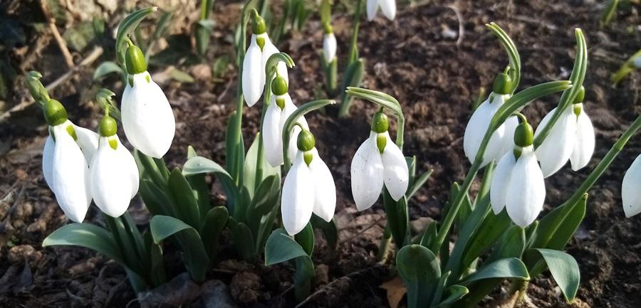 Пролеће почиње данас у 10 сати и 37 минута