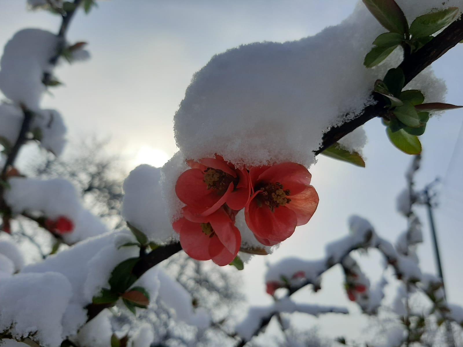 До краја дана још 15 центиметара снега: Ево када можемо очекивати топлије дане