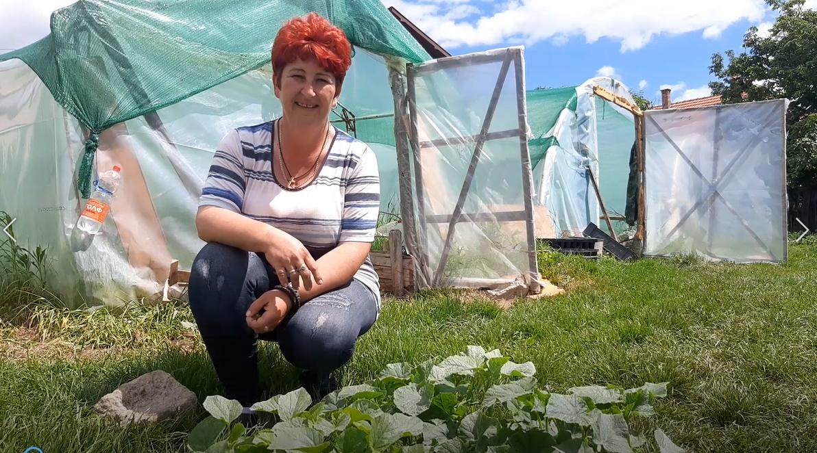Јелена се бави производњом расада, калемљена лубеница је њена специјалност (ВИДЕО)