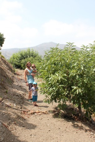 Picking produce in the Spanish campo