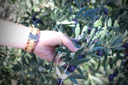 JORD Olive and Acacia Wood Watch Review by Topsy Turvy Tribe view of watch buckle whilst picking olives
