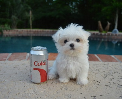 Puppy with Coke