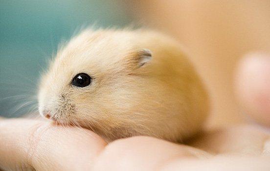 Cute Animal Picture 1