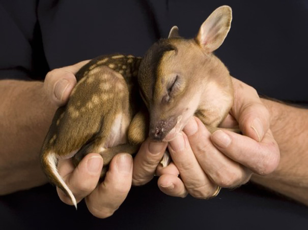 Cute Animal Picture 7