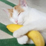 Are Bananas Safe for Cats