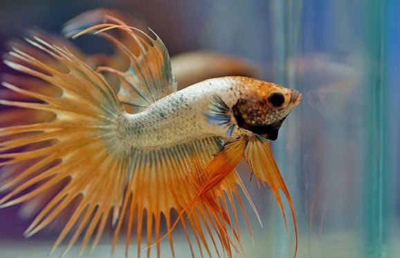 how-to-care-for-betta-fish