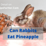 Can Rabbits Eat Pineapple
