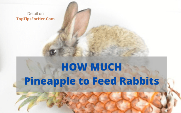 how much pineapple to feed rabbits