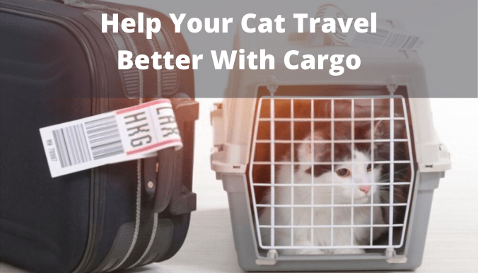 Cat Travel Better with cargo