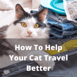 How To Help Your Cat Travel Better