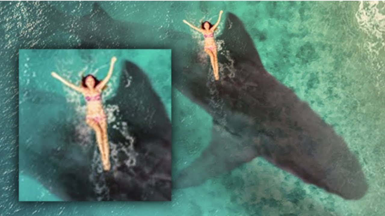 Wow Real Megalodon Giant Megalodon Found On Google Earth