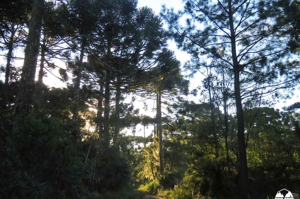 TOP TRIP ADVENTURE | CAMINHO DAS ARAUCARIAS