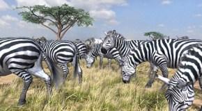 Afrika, un nuevo estilo de juego en PS3