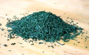 Photo Spiruline en Brindilles