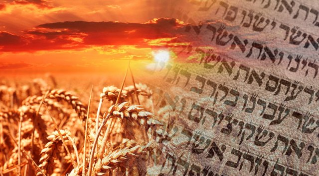 This image has an empty alt attribute; its file name is mjbi-shavuot-feast-blog.jpg