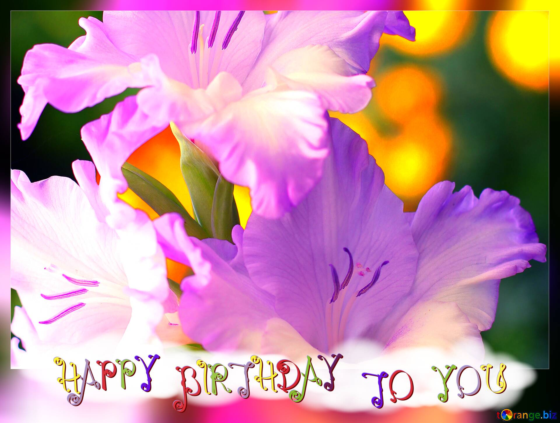Download Free Picture Beautiful Flowers For Congratulations Frame Happy Birthday On Cc By License Free Image Stock Torange Biz Fx 215819