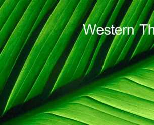 Western theory and acupuncture. The Torbay Acupuncture Centre, Torquay, Devon.