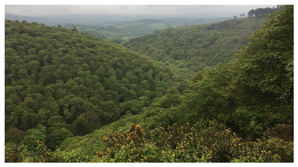 Teign Valley from Sharp Tor