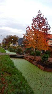 Canal near Aalsmeer