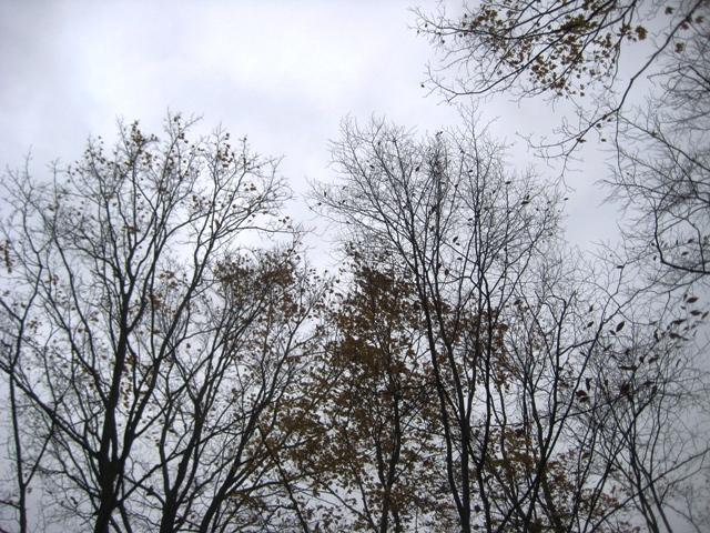 October 31 - 10:00 am - Bare Bones