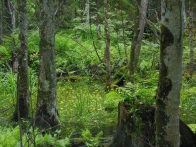 Swamp in the rain 3