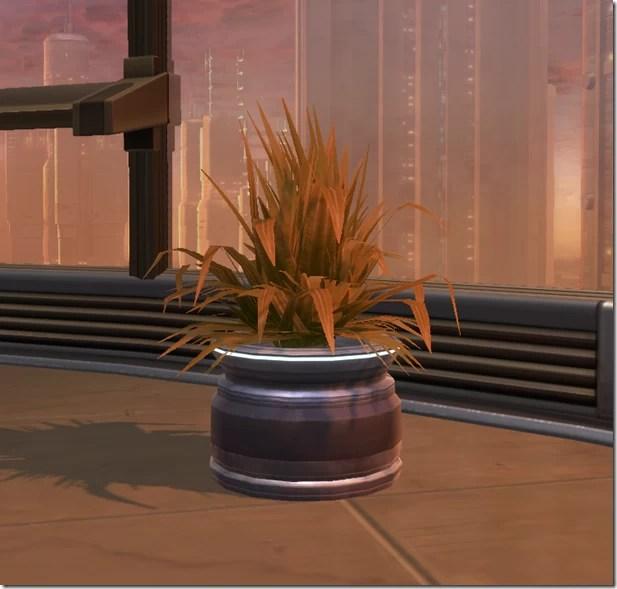 Potted Plant Brown Shrub
