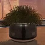 Planter: Executive's Shrub