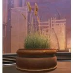 Potted Plant: Sea Grass