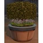 Topiary Tree (Hedge)
