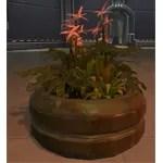 Planter: Pink Rishi Flowers