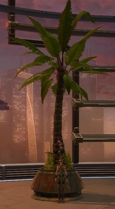 Tree Rishi Palm 2