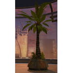 Tree: Rishi Palm