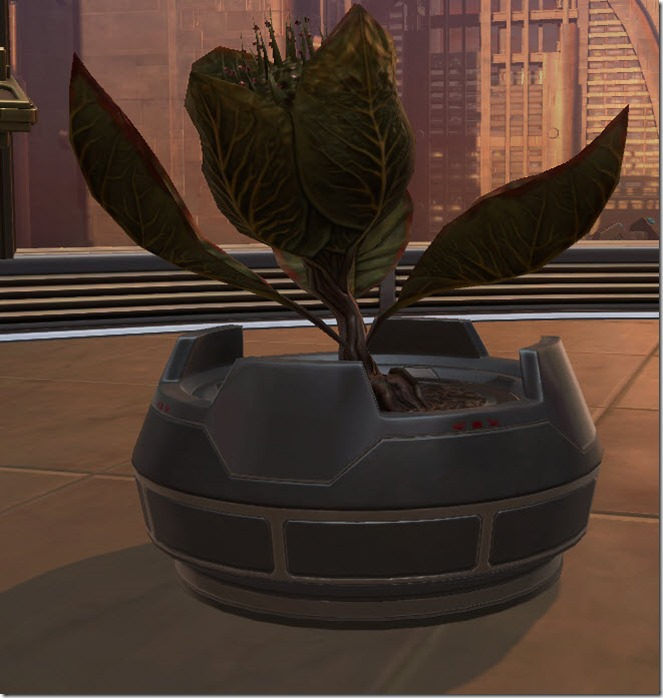 swtor-potted-plant-blooming-bud