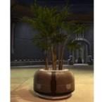 Potted Plant: Zakuul Vertical Bush