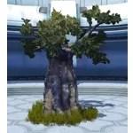 Dantooine Tree (Medium)