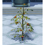 Tall Fruit Plant