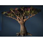 Onderon Blooming Tree