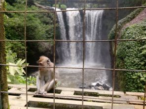 Monyet di Curug Omas