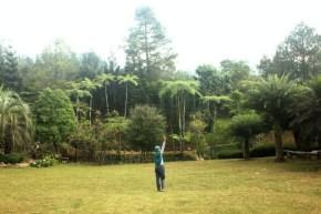 Melrimba Garden