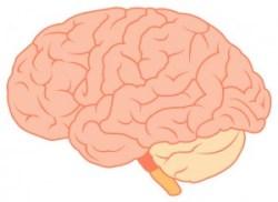 脳梗塞の予防法とは?3つの脳梗塞のタイプとその原因など