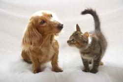 一人暮らしにおすすめのペットについて!飼いやすいのはどのペット??
