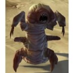 Killik Assassin Larva