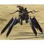 Makrin Creeper Seedling