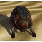 Nightland Nerf Calf