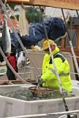 Lions Club Austevoll sel levande fisk direkte frå båt - berre på Torgdagen
