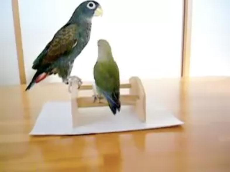 Parrots02