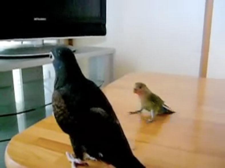 Parrots07