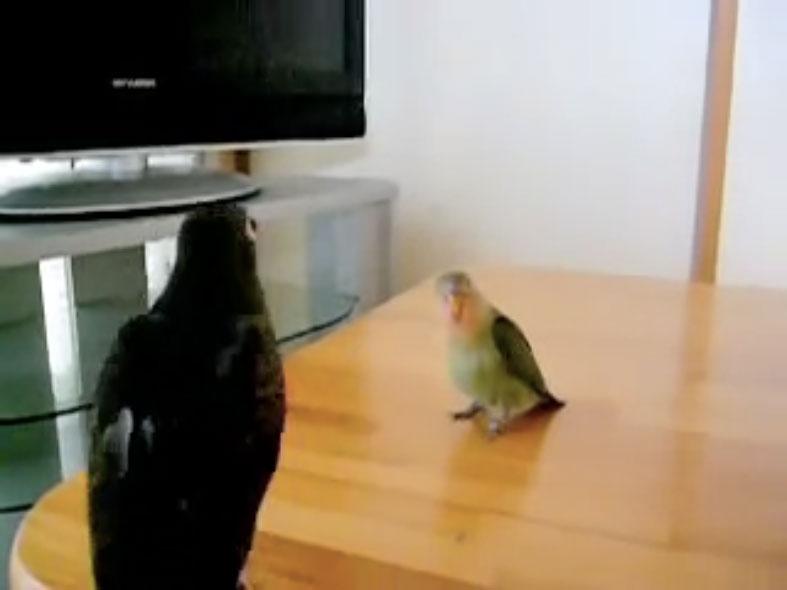Parrots10