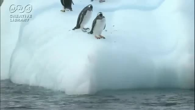 Penguin-Fail07